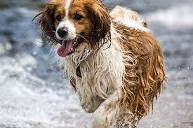 Dog Osteosarcoma Kadil Carpentersdaughter Co