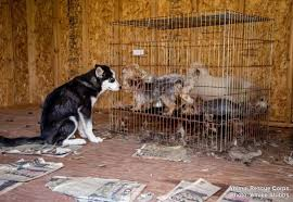 animal shelter pictures. Interesting Pictures Operation Summer Saves To Animal Shelter Pictures L