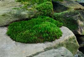The truth about moss \u2013 dispelling moss myths | Moss and Stone Gardens