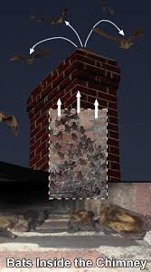 bats in the chimney of a house