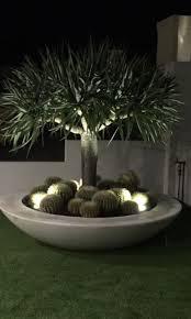 giant low bowl pots sydneys