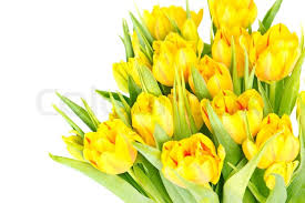 Image result for bunch of tulip flowers