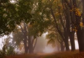 Autumn Mist Fotobehang Behang Bestel Nu Op Europostersbe