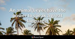 Pet Quotes Custom Pet Quotes BrainyQuote