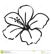 Small Picture Best 25 Hibiscus drawing ideas on Pinterest Hibiscus flower