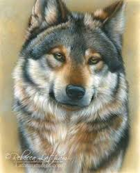 gray wolf drawing colored.  Colored Pencil Portrait Mastery  Dog Colors Drawing Rebecca Latham  Discover The Secrets Of Realistic Portraits Inside Gray Wolf Colored