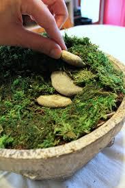 diy fairy garden terrarium easy
