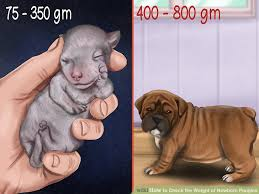 image led check the weight of newborn puppies step 4