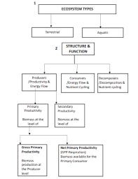 Cbse Class 12 Biology Ecosystem Flow Chart