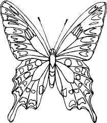 Disegno Da Colorare Farfalla Realistica Disegni Da Colorare E