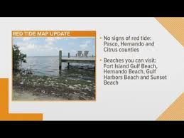 Tarpon Springs Tide Chart Red Tide At Tarpon Springs Beaches Living In Tampa Bay