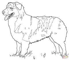 Australian Shepherd Super Coloring Houd Branden Adult Coloring