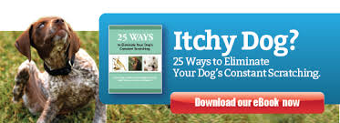 Just brushing your dog can help alleviate itchy skin | Ruff Ideas