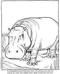 Small Picture Hippopotamus hippo coloring page Zoo animals pages 2 color