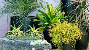 Container Garden Design Cool Inspiration Design