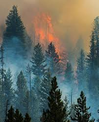 Beaver Creek Fire Wikipedia