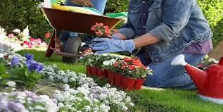 Small Picture Flower Gardening For Beginners Gardening Ideas