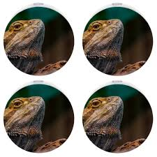 Bearded Dragon Night Light Amazon Com Night Light Plug In Wall Bearded Dragon Reptile