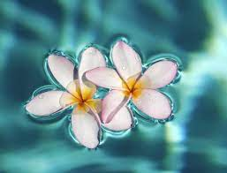 46+ Exotic Flower Wallpapers on ...