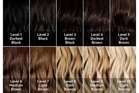 Brunette Hair Color Choices Me Levels Of Hair Color