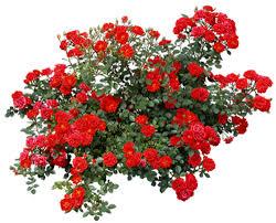 """Résultat de recherche d'images pour """"barre de separation fleurs"""""""