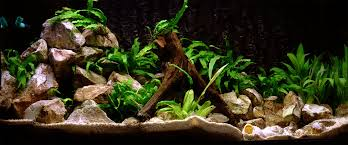 Photo Collection: SYR.36 Fish Tank - HD Wallpapers