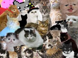 cats collage wallpaper. Fine Wallpaper Cats Animals Collage 1600x1200 Wallpaper Art HD Wallpaper On Cats Collage