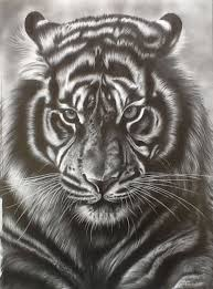 tiger face drawing pencil.  Face Tiger Face Pencil Drawing For