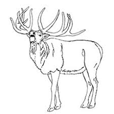 Small Picture 10 Amazing Elk Coloring Pages For Your Toddler