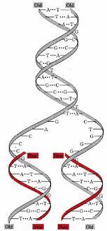 Corechem Functions Of Nucleic Acids Chemprime