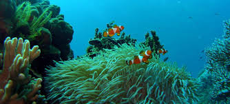Image result for tioman island snorkeling trip