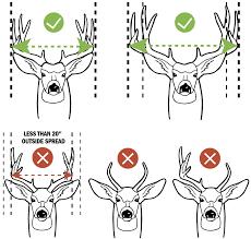 Mule Deer Texas Parks Wildlife Department