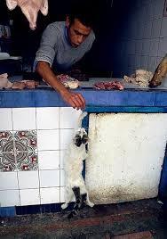 tchatche gratuit algerie sans inscription