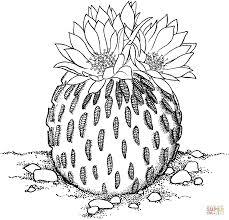 Small Picture Pelecyphora Aselliformis or Peyotillo Cactus coloring page Free