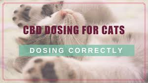 Thyroid Level Chart For Cats Cbd Dosing For Cats Choosing Calculating The Right Dose