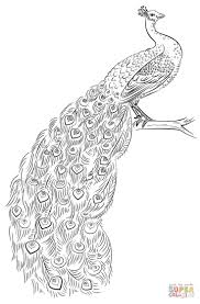 Peacock Coloring Page Free Printable Coloring