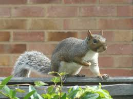 how to keep squirrels out of garden. How To Keep Squirrels Out Of The Garden