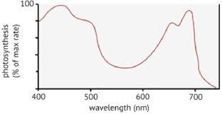Action Spectrum Action Spectrum For Photosynthesis Download Scientific