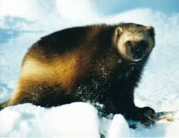 Packing Lists For Alaska Wilderness Rafting Trips - Copper Oar