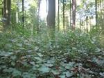 bos beheer