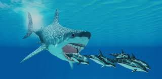 real megalodon shark sightings pictures. Modren Sightings Throughout Real Megalodon Shark Sightings Pictures A