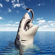 pictures of great white sharks eating people. Simple Pictures According To One Hypothesis Attacks By These Sharks On Humans Is Due  Mistaken Identity Great White  With Pictures Of White Sharks Eating People