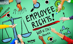 Top 20 Employment Law Facts You Need To Know | Startup Donut