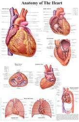 Marma Chart Ayurveda Charts At Rs 600 Piece Medical Chart Id