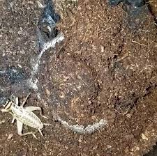 the short shows an insect crawling through the dirt pictured completely unaware that
