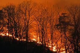 栃木 山 火事