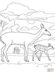 Small Picture White Tail Deer coloring page Free Printable Coloring Pages