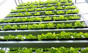 sky greens singapore commercial vertical farm