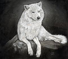 This drawing model for today is considered to be a mythological human having the power to shift into a realistic wolf. How To Sketch A Wolf Arctic Wolf Step By Step Drawing Guide By Finalprodigy Dragoart Com