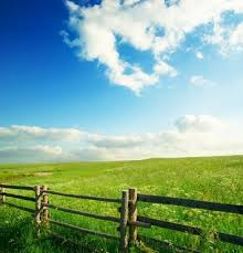 grass and sky backgrounds. Blue Sky Grass From The Highdefinition Picture 11 And Backgrounds